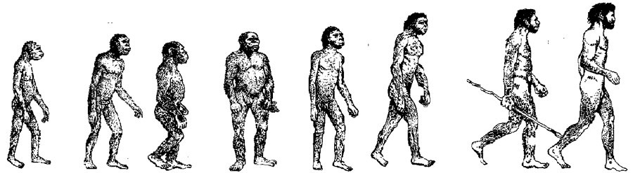 CorteX evolution humaine