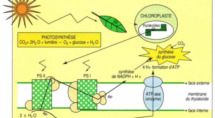 CorteX_image_conf_nature_photosynthese
