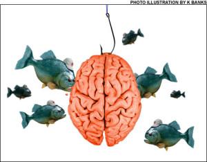 CorteX_cerveau_poissons_K_ba