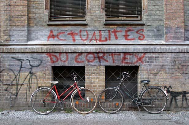 Cortex_Actu