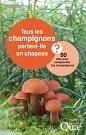 CorteX_Quae_champignons