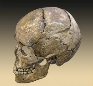 Sutures d'un crâne humain qui rendraient possible une mobilité intrinsèque, interne, inhérente à l'intérieur du crâne, qui créerait des mouvements infimes, mais détectables, entre les différents os.
