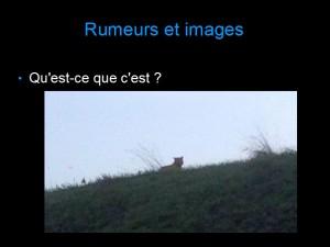 Rumeurs_Tigre