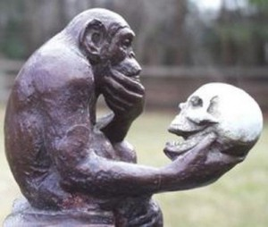 cortex_ape_skull