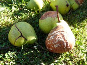 """""""Les preuves sont comme les poires : de ux poires médiocres ne font pas une  bonne poire (à la rigueur une compote)"""" - Tirée de la thèse de Richard Monvoisin"""