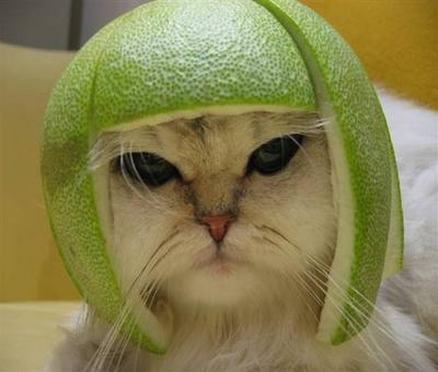 Révélation – La véritable identité des chats